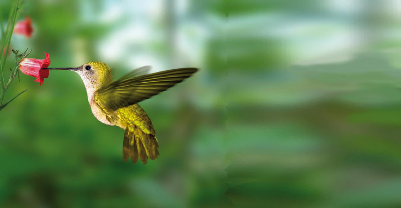 SMS colibri